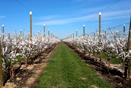 Plantation fruitière en Catalogne, Espagne